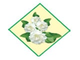 White Jasmine Co., Ltd.Foodstuffs