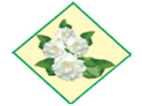 White Jasmine Co., Ltd.(Fragrances)