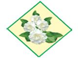 White Jasmine Co., Ltd.(Fragrances)