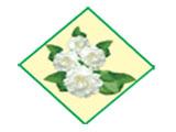 White Jasmine Co., Ltd.Food Stalls